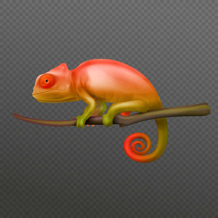 Chameleon Realistic Transparent illustration