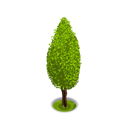 Landscape Cypress Design Vector Illustration Vektorgrafik