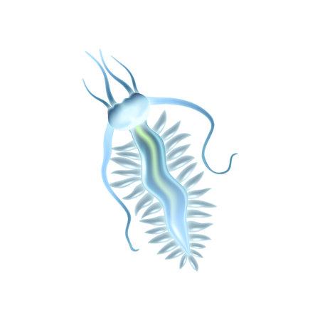 Realistic Plankton Illustration