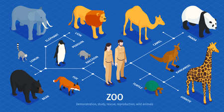 Isometric Zoo Animals Infographics