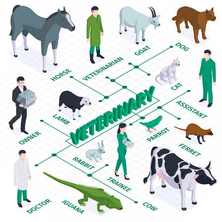 Veterinary Isometric Flowchart Composition