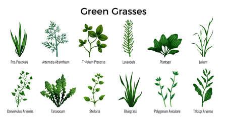 Green Grasses Set Ilustração Vetorial