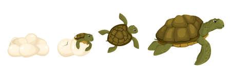 Turtle Life Cycle Set