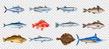Sea Fish Transparent Set