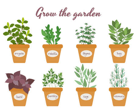 Set of vector culinary herbs in pots with labels with fresh oregano rocket thyme bay basil rosemary parsley and sage with text above - Grow The Garden Vettoriali