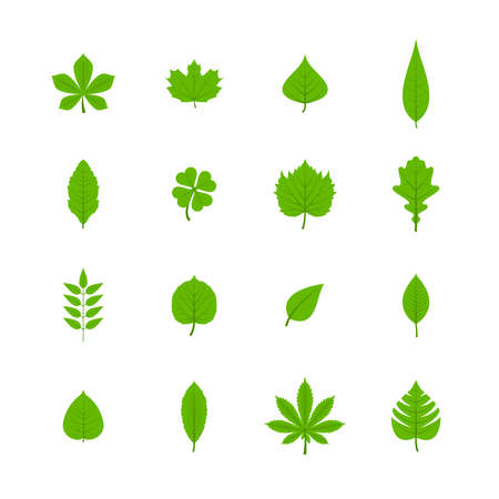 Green trees leaves flat icons set of oak aspen linden maple chestnut clover plants isolated vector illustration