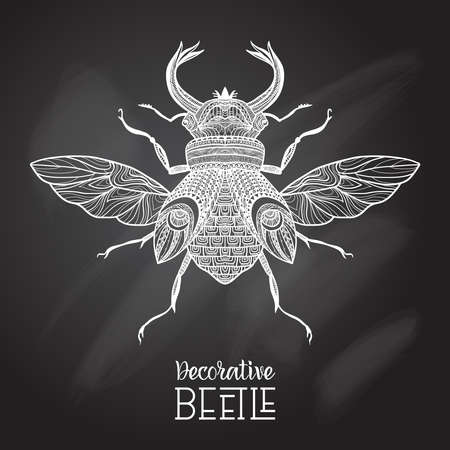 Hand drawn decorative beetle with ornament on chalkboard vector illustration
