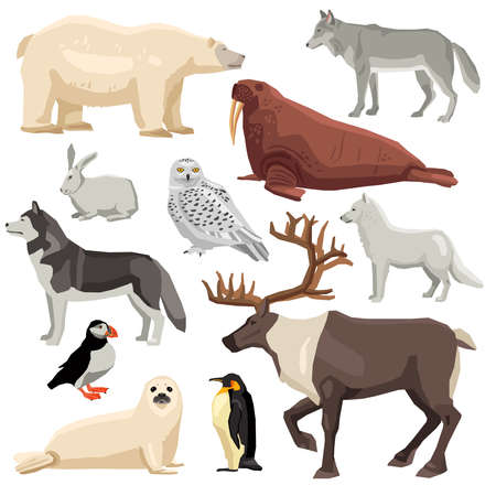 DIfferent flat polar animals and birds set isolated on white background vector illustration Vecteurs
