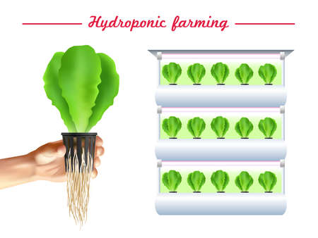 Hydroponics system poster with green plant bed and hand with seedlings on white background vector illustration