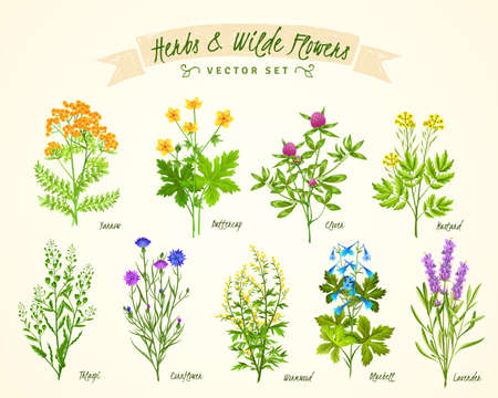 Flat white background with set of various blooming herbs and wild flowers with their names isolated vector illustration