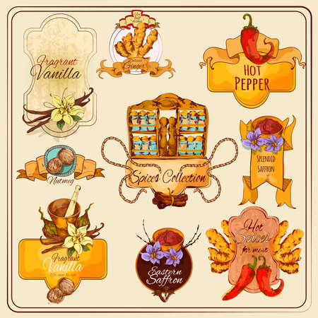 Cooking spices vintage labels set with hand drawn food condiments isolated vector illustration