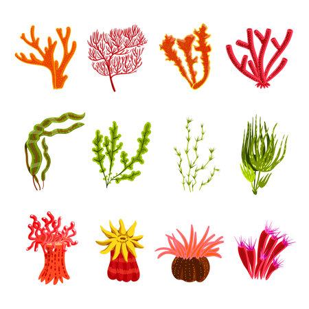 Underwater ocean and aquarium coral decorative icons set isolated vector illustration