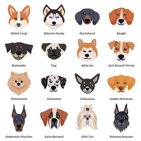 Purebred dogs faces icon set with welsh corgi Siberian husky Rottweiler Dalmatian akita inu breeds vector illustration