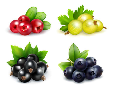 Set of isolated berry clusters in realistic style with gooseberries cranberries blueberries and black currants vector illustration Vektorgrafik