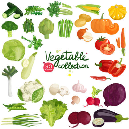 Vegetables and herbs collection with potato, corn, beet, eggplant, broccoli, arugula, leek and lettuce isolated vector illustration Vetores