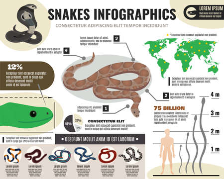 Snakes reptiles infographics with information about royal python and various serpents on light background vector illustration