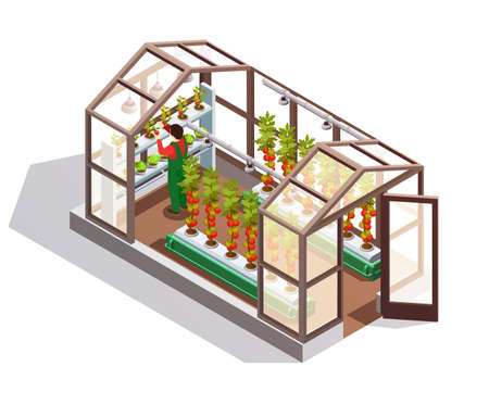 Isometric greenhouse for growing vegetables and fruits with glass walls shelves and artificial lighting isolated vector illustration