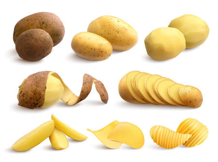 Raw and fried potato set of crude treated chopped and chips on white background realistic vector illustration Vetores