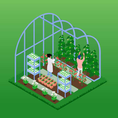 Greenhouse isometric composition with people working in glasshouse harvesting ripe vegetables planting seedlings growing flowers vector illustration