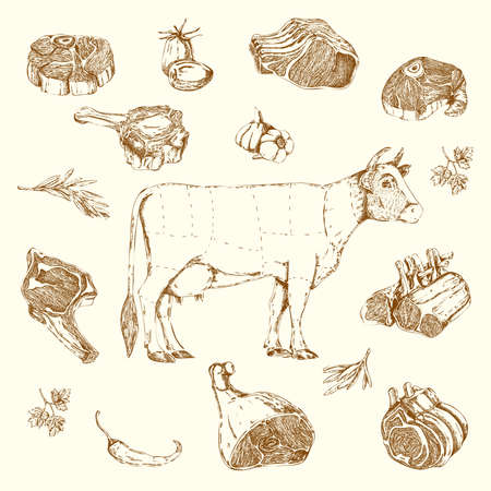Meat hand drawn elements set with cow and parts of beef herbs and vegetables isolated vector illustration Vetores