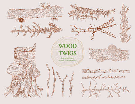 Hand drawn wood branches set with different tree twigs trunks stumps cones and mushrooms isolated vector illustration