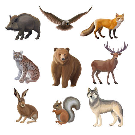 Cartoon forest animals set with wild boar owl fox lynx bear deer hair squirrel wolf isolated vector illustration Ilustración de vector