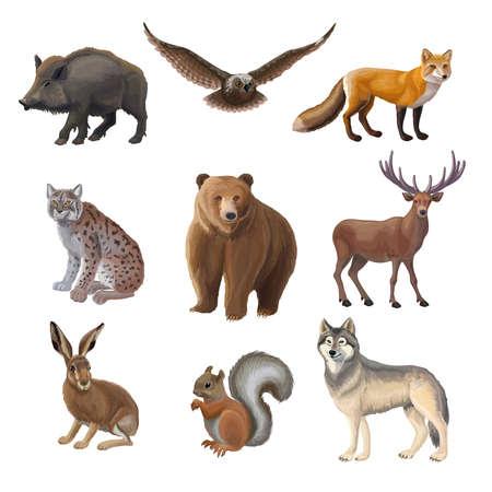 Cartoon forest animals set with wild boar owl fox lynx bear deer hair squirrel wolf isolated vector illustration Vektoros illusztráció