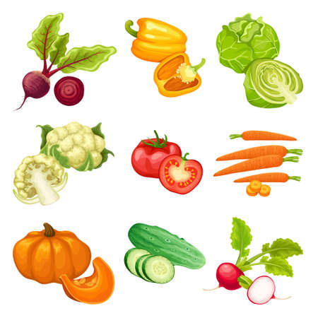 Cartoon organic vegetables set with beet pepper cabbage cauliflower tomato carrot pumpkin cucumber radish isolated vector illustration