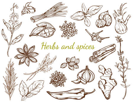 Herbs and spices collection with different natural and organic plants in sketch style isolated vector illustration