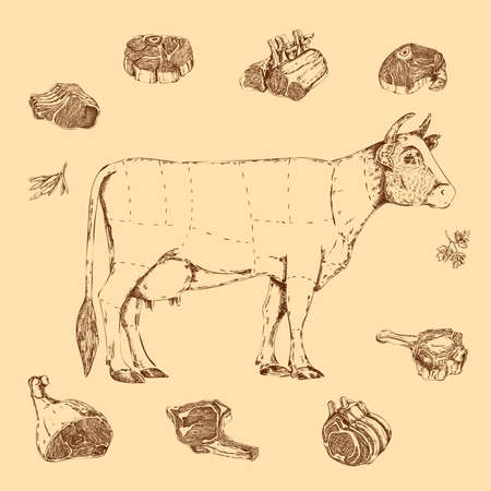 Meat hand drawn scheme of butchering beef with cow and herbs letterings on beige Vector Illustratie