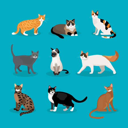 Set of vector cats depicting different breeds and fur color standing sitting and walking on a blue background Ilustración de vector
