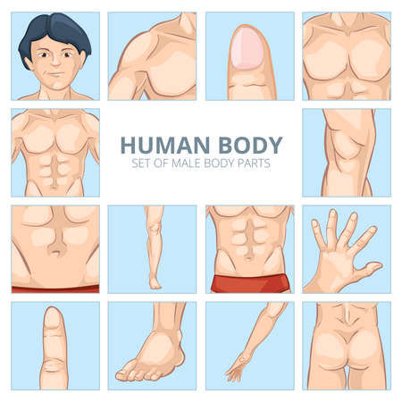Male body parts in cartoon style. Human chest, knee and abdomen, foot and hand, ass, finger and phalange. Vector illustration icons set