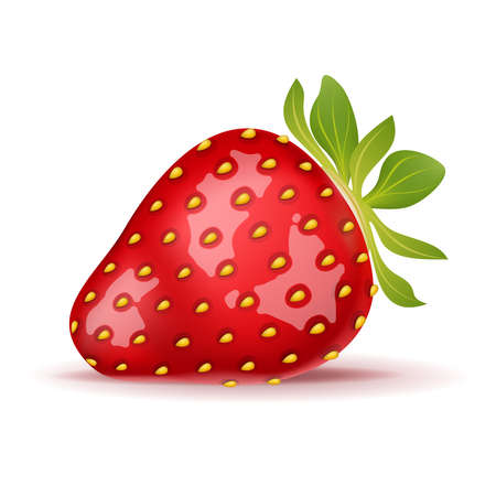Ripe strawberry isolated on white. Vector illustration.