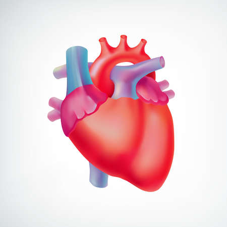 Medical light organ anatomic concept with colorful human heart on white background isolated vector illustration