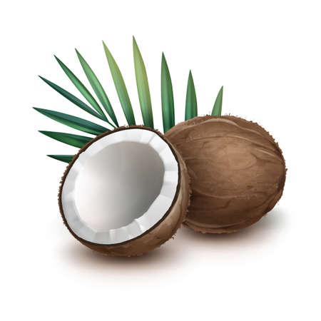 Vector brown whole and half coconut with green palm leaf isolated on white Background