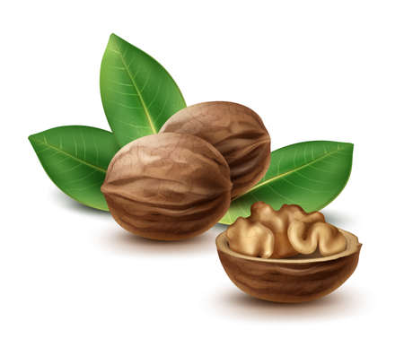 Vector whole and half walnuts with leaves close up side view isolated on white background Vecteurs