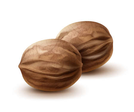 Vector two whole walnuts close up side view isolated on white background
