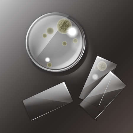 Vector petri dish with molds, bacterial colonies top view isolated on background Vector Illustration