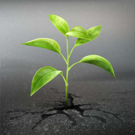 Vector plant sprout through asphalt close up front view