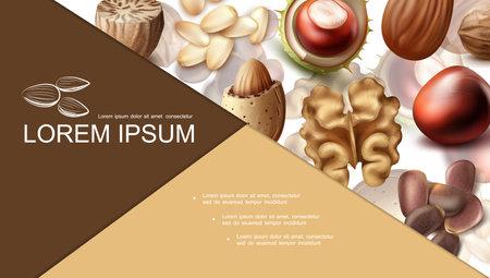 Realistic nuts colorful composition with nutmeg hazelnut almond peanut walnut chestnut brazil and cedar nuts vector illustration