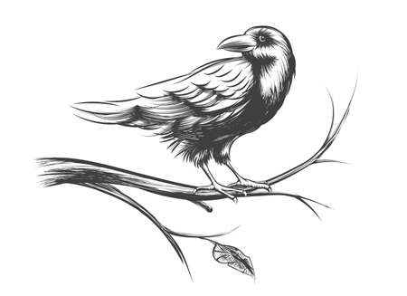 Raven or black crow sketches and silhouettes vector set. Animal bird on branch tree illustration