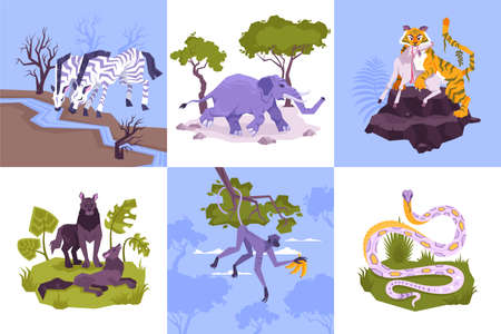 Set of square compositions with flat characters of rainforest plants and tropical animals with snakes predators vector illustration