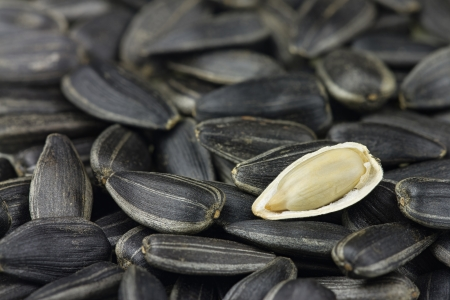 Sunflower seed open on other seeds photo