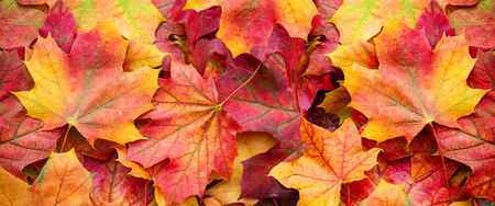 Red and Orange Autumn Leaves Background Reklamní fotografie