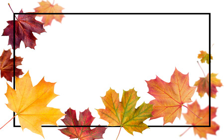 Autumn falling leaves. Autumnal foliage fall and poplar leaf flying in wind motion blur. Autumn design. Templates for placards, banners, flyers, presentations, reports.