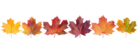 Ð¡ollection beautiful colorful autumn leaves isolated on white background Reklamní fotografie