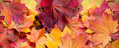 Yellow and red leaves. Autumn background.