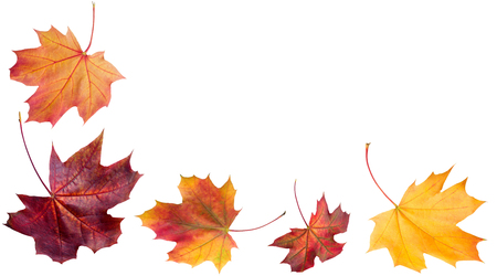 Autumn falling leaves. Autumn design. Templates for placards, banners, flyers, presentations, reports.