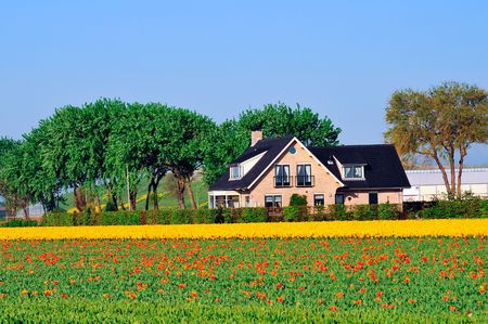 traditional Dutch house near the field with tulips Stock Photo - 6632368