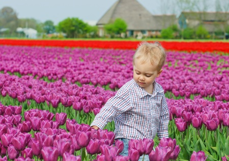 Boy In Tulip Field Stock Photo - 9213823
